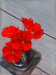 Geraniums-From-A-top